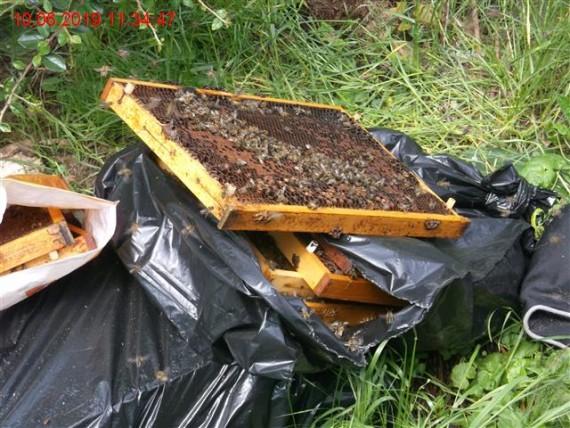 Neobvyklý odpad v podobě včel Foto: Městská policie Brno